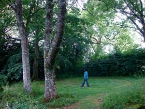 Dartington & Totnes-walking