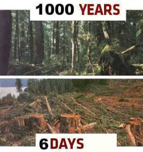 100yearstrees6dayslogging
